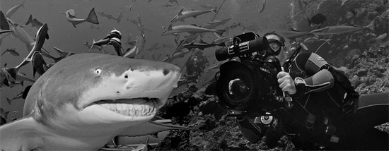Sam Campbell filming at Beqa Lagoon, Fiji