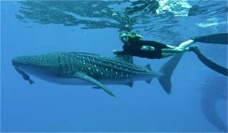 Making friends with a whaleshark in the Pilippines