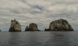 The Pinnacles, Poor Knights Islands