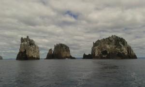The Pinnacles, Poor Knights Islands