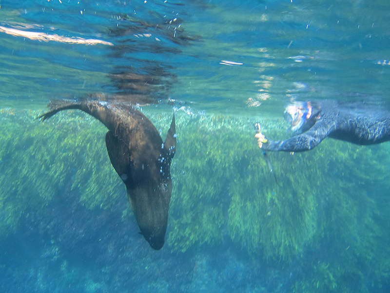 Diving with seals at the Poor Knights